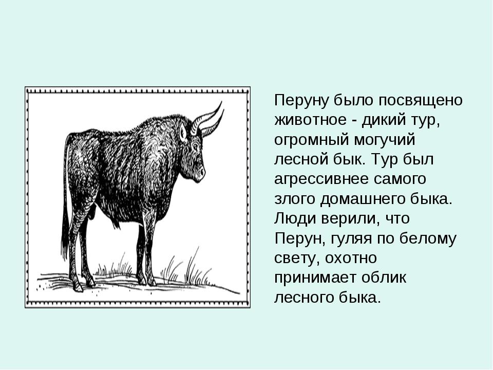 Перуну было посвящено животное - дикий тур, огромный могучий лесной бык. Тур...
