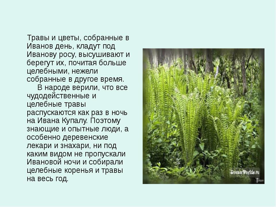 Травы и цветы, собранные в Иванов день, кладут под Иванову росу, высушивают...