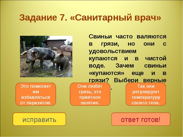 Задание 7. «Санитарный врач» Свиньи часто валяются в грязи, но они с удоволь...