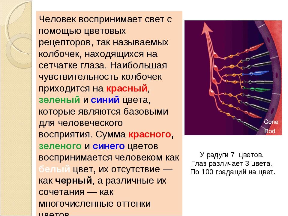 Человек воспринимает свет с помощью цветовых рецепторов, так называемых колбо...
