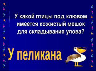 У какой птицы под клювом имеется кожистый мешок для складывания улова?