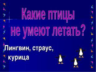 Пингвин, страус, курица