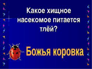 Какое хищное насекомое питается тлёй?