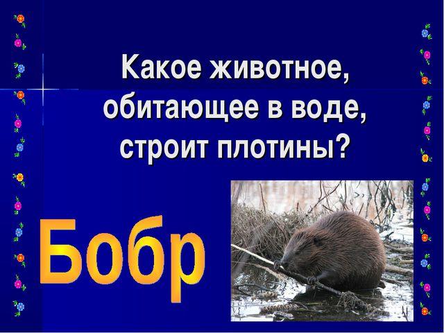 Какое животное, обитающее в воде, строит плотины?