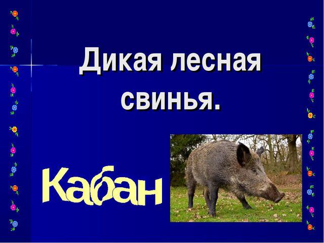 Дикая лесная свинья.