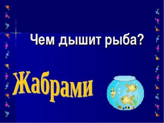 Чем дышит рыба?
