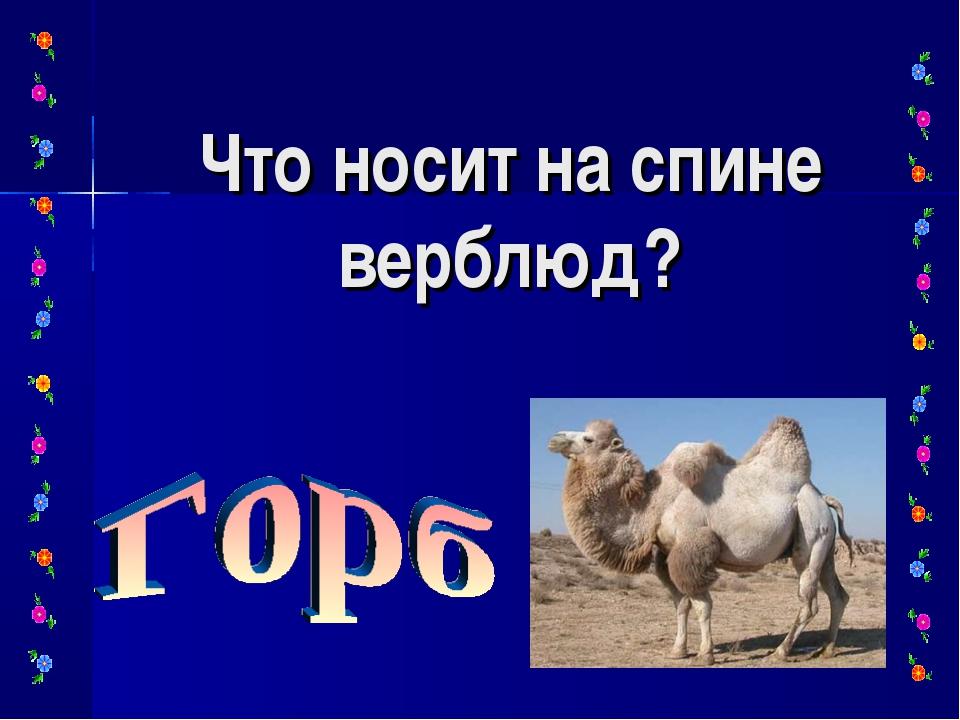 Что носит на спине верблюд?