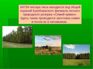 64734 гектара леса находится под общей охраной Букебаевского филиала лесного