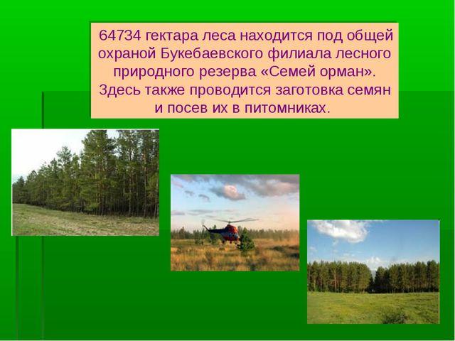 64734 гектара леса находится под общей охраной Букебаевского филиала лесного...