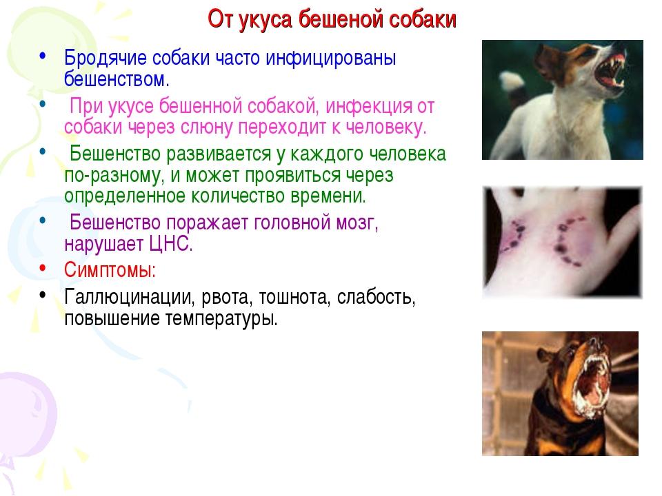 Признаки заражения бешенством от укуса собаки