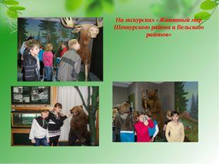 На экскурсиях «Животный мир Шенкурского района и Вельского районов»
