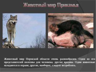Животный мир Пермской области очень разнообразен. Одни из его представителей