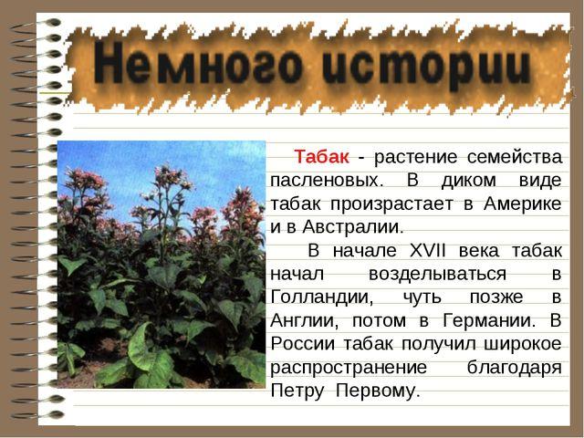 Табак - растение семейства пасленовых. В диком виде табак произрастает в Аме...