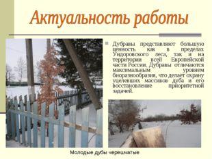 Дубравы представляют большую ценность как в пределах Ундоровского леса, так и
