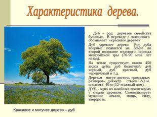 Дуб – род деревьев семейства буковых. В переводе с латинского обозначает «кр