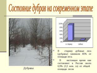 В старину дубовые леса (дубравы) занимали 85% от площади леса. В настоящее вр