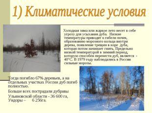 Холодная зима или жаркое лето несет в себе угрозу для усыхания дуба. Низкие