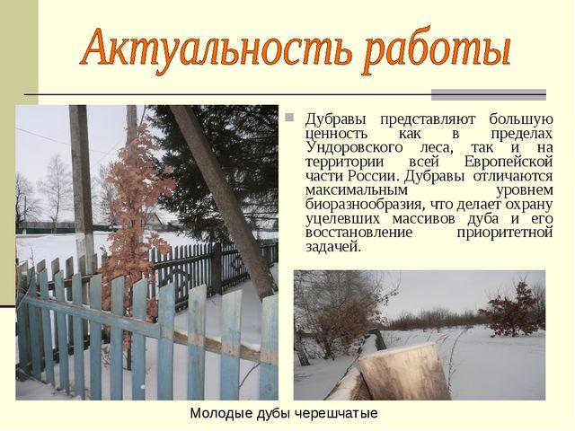 Дубравы представляют большую ценность как в пределах Ундоровского леса, так и...