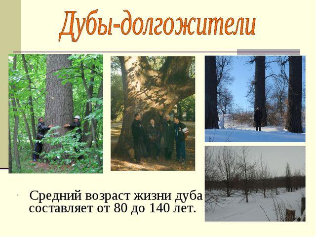 Средний возраст жизни дуба составляет от 80 до 140 лет.