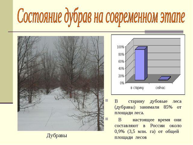 В старину дубовые леса (дубравы) занимали 85% от площади леса. В настоящее вр...