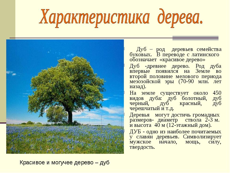 Дуб – род деревьев семейства буковых. В переводе с латинского обозначает «кр...