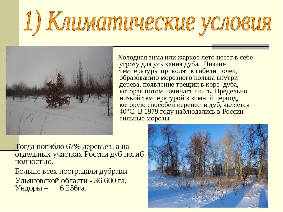 Холодная зима или жаркое лето несет в себе угрозу для усыхания дуба. Низкие...