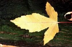 leaf39m