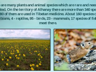 There are many plants and animal species which are rare and need to be protec