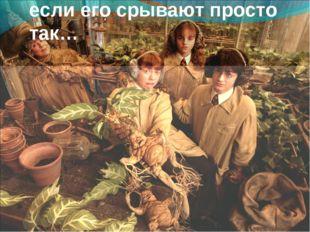 Каждое растение «плачет», если его срывают просто так…