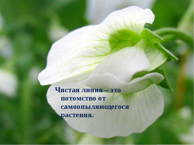 Чистая линия – это потомство от самоопыляющегося растения.