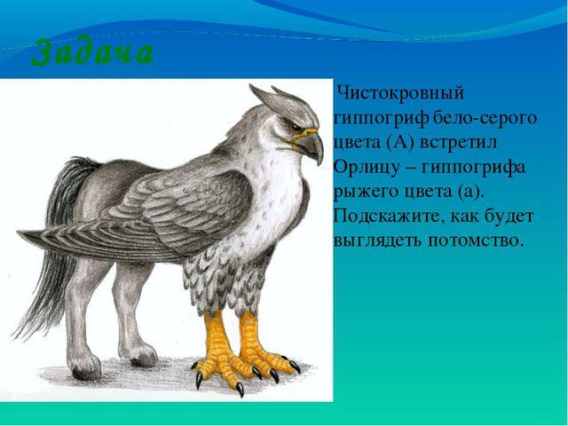 Задача Чистокровный гиппогриф бело-серого цвета (А) встретил Орлицу – гиппогр...