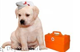 http://dogsecrets.ru/images/stories/kruglosutochnaya-veterinarnaya-klinika1.jpg
