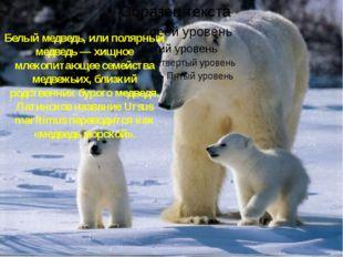 Белые медведи Белый медведь, или полярный медведь — хищное млекопитающее семе