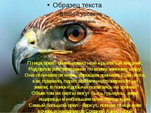 Орёл Птица орел - очень известный крылатый хищник. Род орлов распространён по