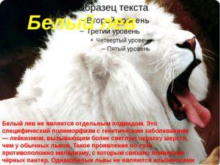 Белый лев Белый левне является отдельным подвидом. Это специфический полимор