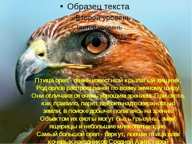 Орёл Птица орел - очень известный крылатый хищник. Род орлов распространён по...
