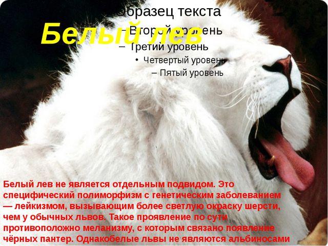 Белый лев Белый левне является отдельным подвидом. Это специфический полимор...