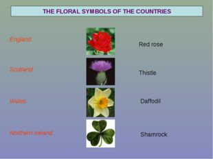 Red rose Thistle Daffodil THE FLORAL SYMBOLS OF THE COUNTRIES England Scotlan