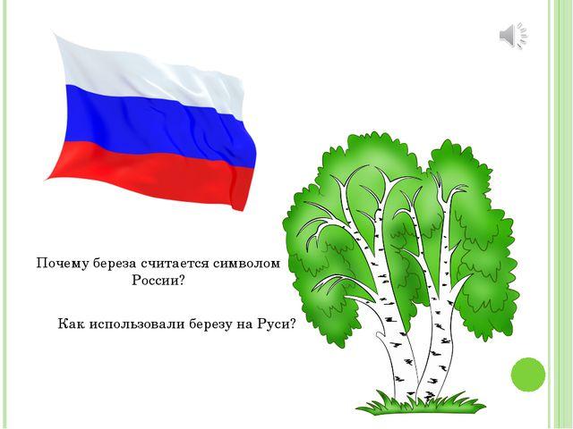 Почему береза считается символом России? Как использовали березу на Руси?