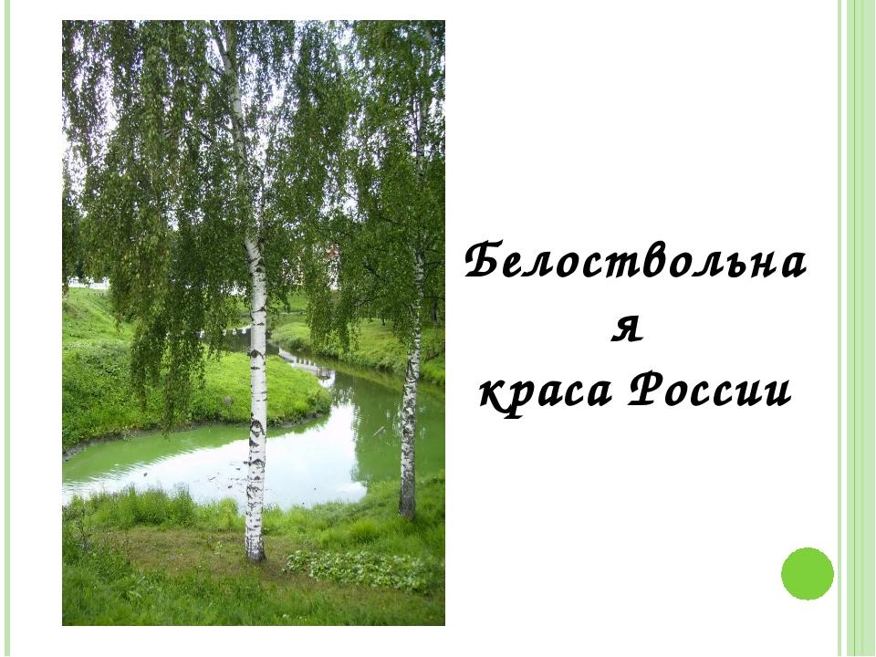 Белоствольная краса России