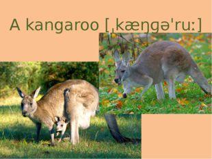 A kangaroo[ˌkæŋɡəˈruː]