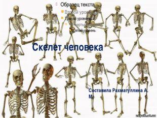 Скелет человека Составила Рахматуллина А. М.