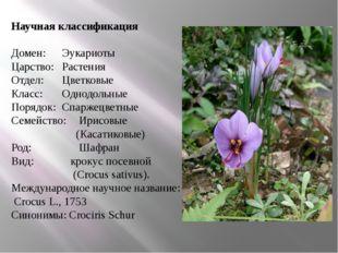 Научная классификация Домен: Эукариоты Царство: Растения Отдел: Цветковые