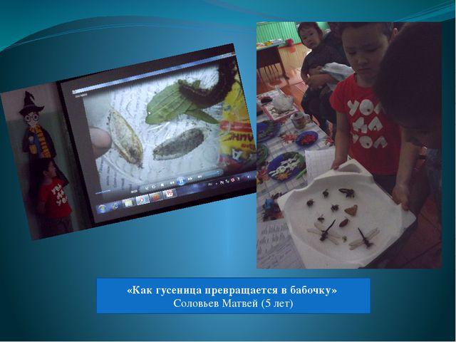 «Как гусеница превращается в бабочку» Соловьев Матвей (5 лет)