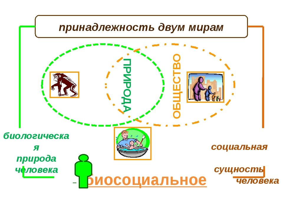 ПРИРОДА ЧЕЛОВЕК принадлежность двум мирам биологическая природа человека соц...