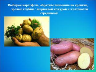 Выбирая картофель, обратите внимание на крепкие, зрелые клубни с шершавой кож
