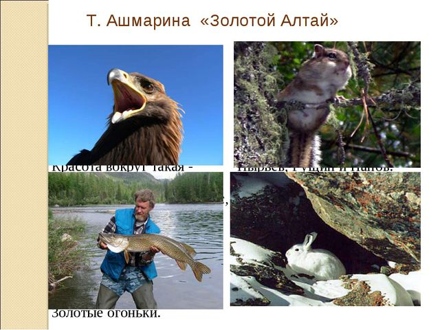 Т. Ашмарина «Золотой Алтай» Как случилось, что наш край Люди стали звать Алта...