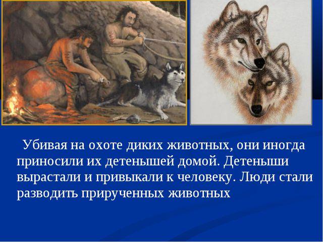 Убивая на охоте диких животных, они иногда приносили их детенышей домой. Дет...