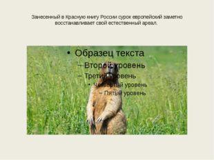 Занесенный в Красную книгу России сурок европейский заметно восстанавливает с