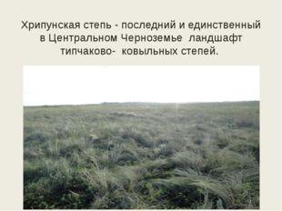 Хрипунская степь - последний и единственный в Центральном Черноземье ландшафт
